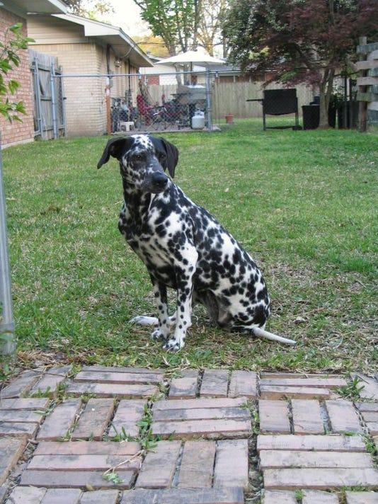 Domino rescue dog