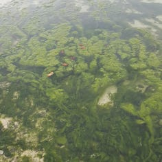 Our View: Invest in the fight against invasive species