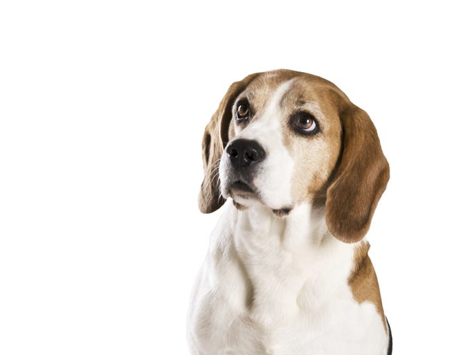 Breeds that Men Find Attractive in Mates: