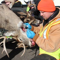 Chronic wasting disease, scourge of wild deer, found for first time in Milwaukee County