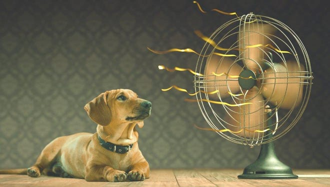 Keep your home, family and furry friends comfortably cool this summer and save on your monthly bills.