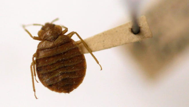 Bedbugs can survive extreme heat and cold.