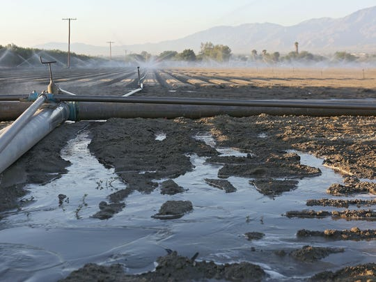 A field is irrigated near Fillmore Street and Avenue 52 in the eastern Coachella Valley on Sept. 24, 2015.