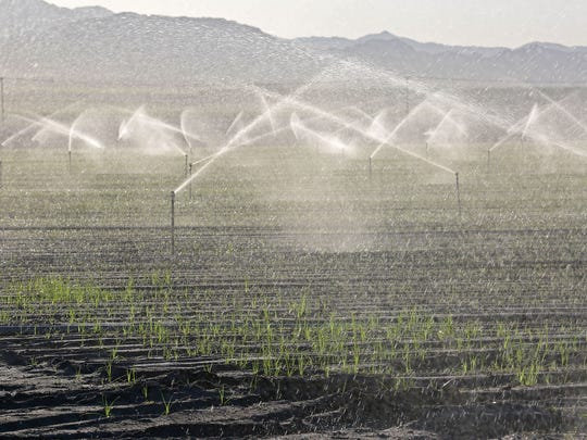 Sprinklers irrigate a field near Fillmore Street and Avenue 54 in the eastern Coachella Valley on Sept. 24, 2015.