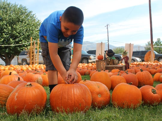 Javier Molinar, 7 years old, checks out the pumpkins at the Grace United Methodist Pumpkin Patch on Thursday.