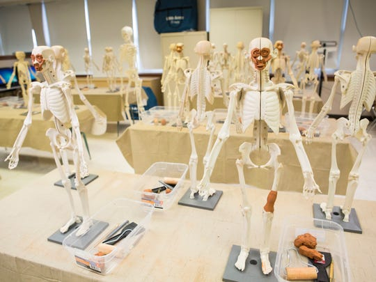 """Clay human anatomical models sit on display inside a medical class at Central High School. JCPS has approved the first high-school-level Montessori program at Central High School, which will look to complete the bridge for current JCPS K-8 Montessori programs through high school. """"JCPS has a K-8 experience for families in the Montessori program and then it stopped. We were getting you three-quarters of the way and then there was nothing else. Kids that excel in that program love it,"""" principal Raymond Green said. Nov. 30, 2016"""