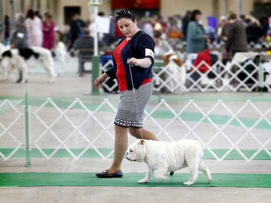 Dog lovers enjoy the Indy Winter Classic Dog Show inside the West Pavilion at the Indiana State Fairgrounds on Feb. 14, 2016.