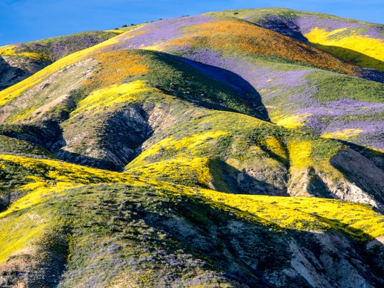 Last year brought a super bloom in Carrizo Plain National Monument.