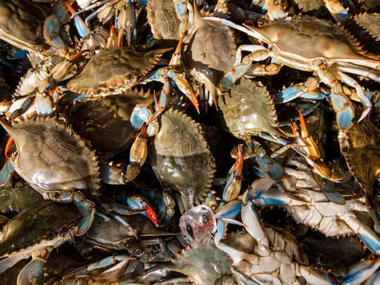 Live blue crabs are displayed for sale at the Maine