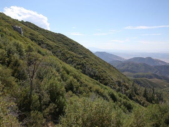 The San Bernardino National Forest near Rimforest,