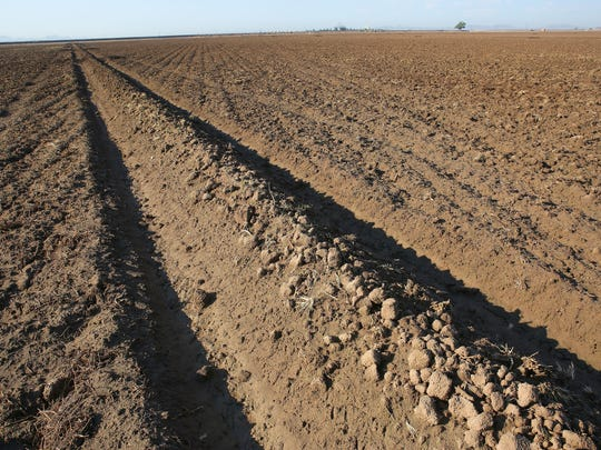 Some fields are left unplanted and fallow in the Palo Verde Valley each year through a program that helps free up water for cities in Southern California.