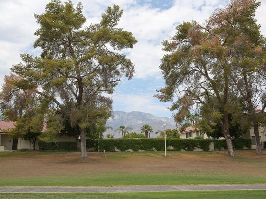 On the other side of the 15th fairway of Tahquitz Creek Golf Course fairway housing is not behind tamarisk trees.