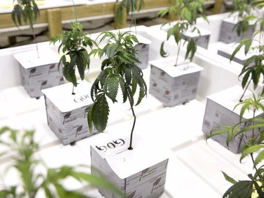 636622320109969991-20180416-Bureau-Cannabis-Control05.jpg
