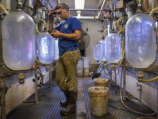 Curtis Coombs works on milking what remains of his dairy cows in Smithfield.