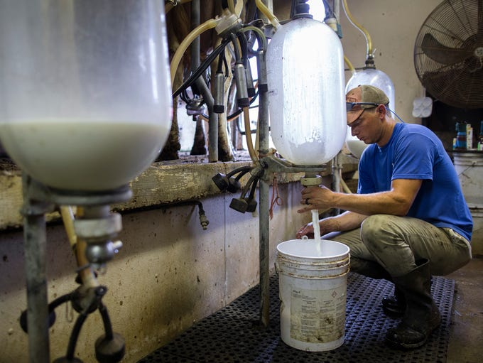 Curtis Coombs works on milking what remains of his