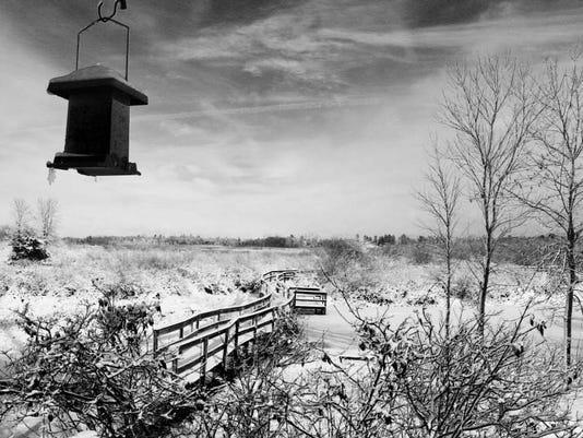 winter dunes.jpg