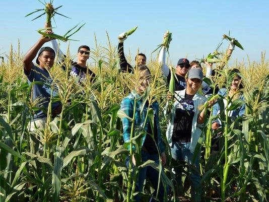 Harvesting_2.jpg