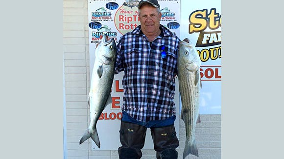 The Brigantine surf continues to produce as Al Jones shows off two nice fish he caught this week.