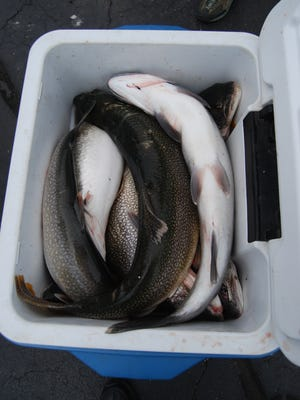 Anglers Saturday were competing in the 37th annual Salmon Stakes