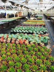 Hundreds of varieties of succulents growing in a greenhouse at Succulent Gardens.