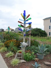 Kaleidoscope Stroke bottle tree (Silica transparencii 'Gaudii') in Kitty Hawk, N.C.