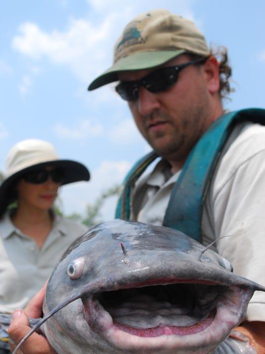 Blue Catfish2.jpeg