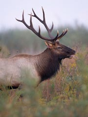 Officials are seeking information about a photograph of two severed elk heads.
