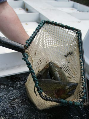 Fall trout stocking begins Tuesday in New Jersey, however,  some locations will be bypassed if water levels are too low.