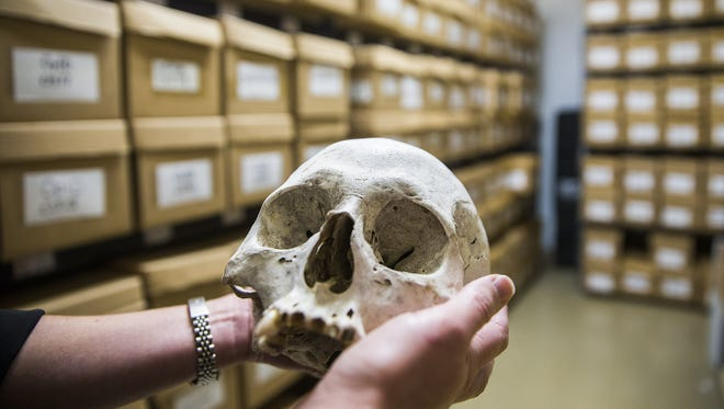 Surrounded by boxes containing unidentified human remains, Kate Spradley holds the skull of an unknown border crosser at the Texas State Forensic Anthropology Center in San Marcos, Texas.