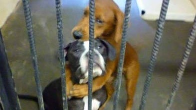 Angels Among Us Pet Rescue posted this image of two shelter dogs to their Facebook page.