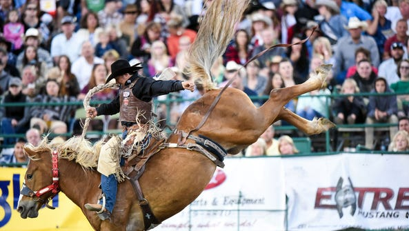 A cowboy rides a bucking bronco during the Saddle Bronc