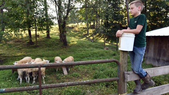 Marcus Wells, 10, watches over his flock of Cheviot sheep after feeding them at his grandma's farm in Dresden. Wells decided to raise his own sheep in hopes of earning money for a college fund to attend Ohio University.