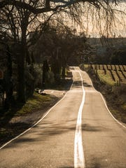 Country road through the vineyards of Amador County's