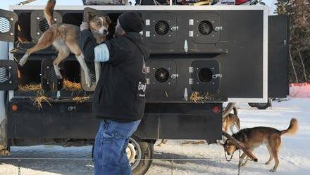 Iditarod Trail Sled Dog Race dog handler Mark Hibma unloads an Ally Zirkle team dog prior to the start of the race Sunday, March 6, 2016 in Willow, Alaska.  (AP Photo/Michael Dinneen)