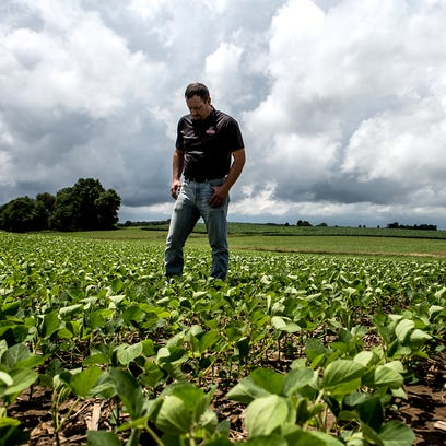 Andy Hollenback stands in the middle of his soy bean