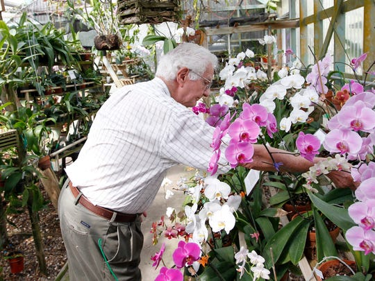 Sam Jones, orchid curator at the South Texas Botanical Gardens & Nature Center, organizes orchids in April 2012 as he prepares for the upcoming Big Bloom plant sale.