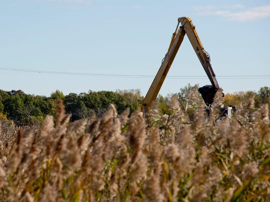 An excavator is seen over a tall patch of phragmites Wednesday, October 14, 2015 on Harsens Island. The $3.5 million project, part of the EPA Great Lakes Restoration Initiative, will widen an dredge Krispin Drain, restore native vegetation and make the waterway navigable to canoes and kayaks.