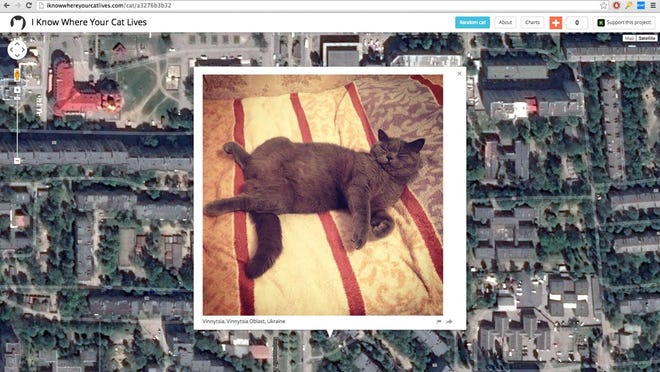 This is 1 of the 1 million cat images on Owen Mundy's website.