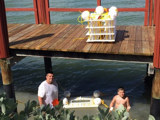 """David Wolff, left, executive director of the Fort Myers based non-profit Ocean Habitats, Inc., installs a """"mini reef"""" under the Marco Island Yacht Club dock with the assistance of his son Sage."""
