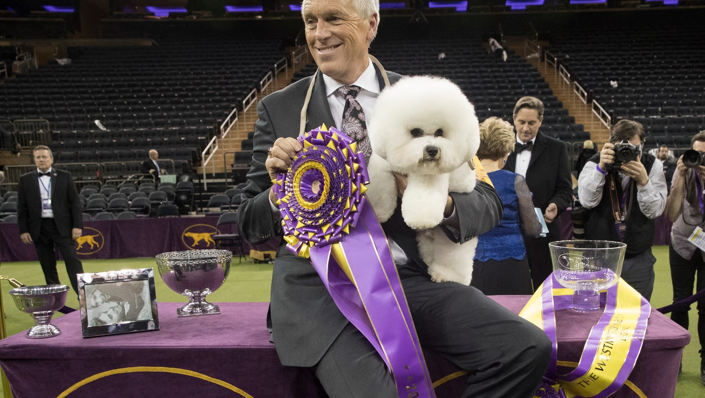 Michigan dog, Flynn, wins 'best in show' at Westminster Dog Show