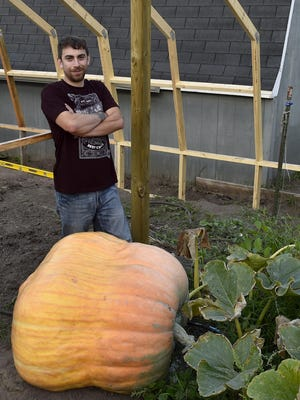 First-year giant pumpkin grower Matt Fay poses with the estimated 546-pound pumpkin that he cultivated at his Algoma home. In the background is the frame Fay constructed for greenhouse he will use next year, where the crop will be in a controlled environment.