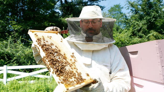 Beekeeper Zev Oster, 39, of Monsey, working his beehives on his Montebello property on Friday, August 12, 2016.  Oster has been at odds with the village of Montebello over the bees on his property.