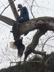 Taney County firefighter Brian Chaney cuts a tangle
