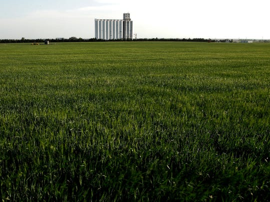 A field of winter wheat stands as a grain elevator rises in the distance Thursday, May 10, 2018, in Toulon, Kan. U.S. farmers are expected to harvest their smallest winter wheat crop in more than a decade amid an ongoing drought that has devastated fields across the nation's breadbasket and a global surplus of the grain that has depressed prices, according to government report released Thursday.