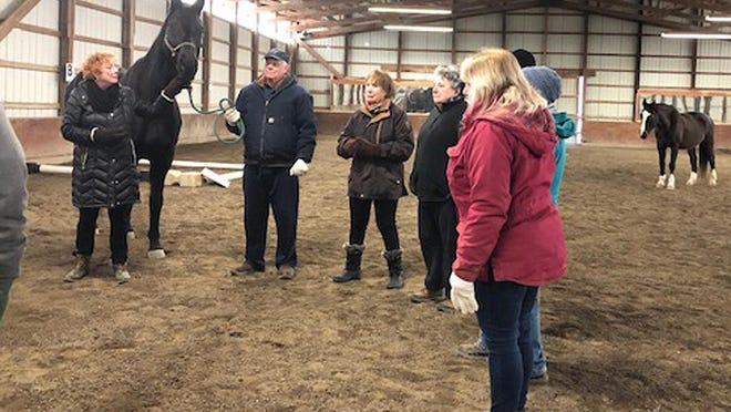 The Amity Foundation for Healing with Horses' Board of Directors were in the ring with their horses, learning the value of cooperation and communication and having a great time in the process.