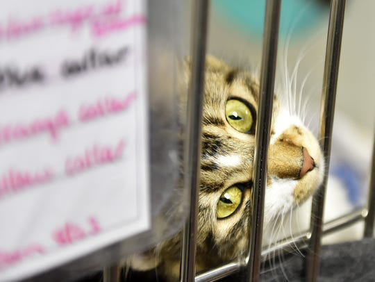 The Green Bay and Door County humane societies announce