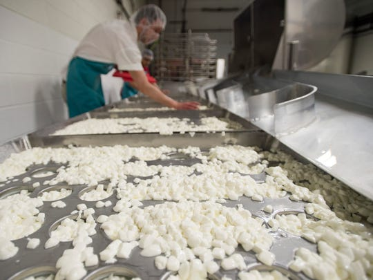 Cheese curds are divided into what will become wheels of soft cheese at the MouCo Cheese Company on Tuesday, January 17, 2017.
