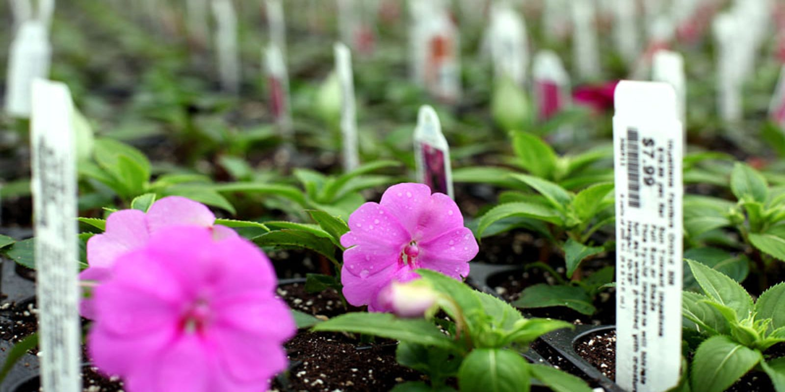 Michigan Greenhouses Reopening After