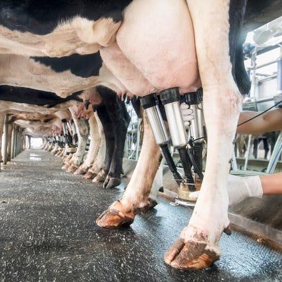 Milk is sour issue in U.S.-Canada trade talks as Trump seeks Nafta renegotiation