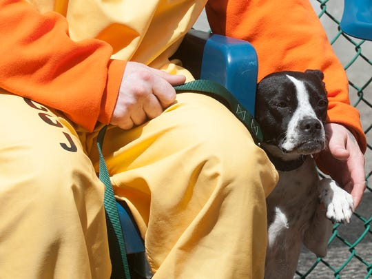Camden County Jail inmate, Rinaldo Sierra, interacts with his dog during a press conference at the Camden County Jail. Camden County announced a new program at the county jail, allowing inmates to train rescue dogs which will then be matched with veterans.